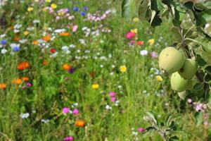Permakultur Anlegen - Garten Und Balkon Gemusegarten Planen Anlegen