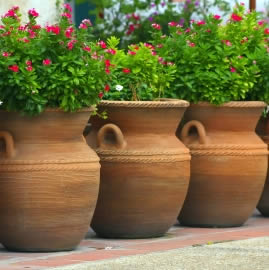 Pflanzen im Terrakottakübel