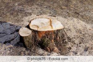 Baumstumpf vernichten