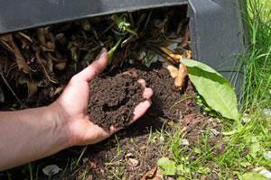 frischer Kompost