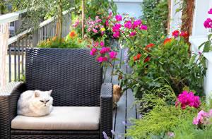 Balkonbepflanzung Ideen Tipps Blumen Bilder
