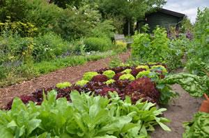Bauerngarten anlegen - Tipps für Pflanzen und Blumen