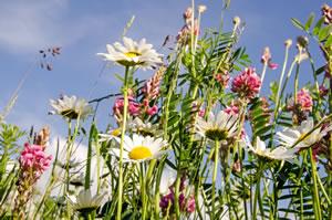 Blumenwiese Anlegen - Die Schönsten Wiesenblumen Blumenwiese Anlegen Garten