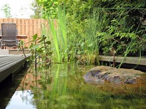 Pflanzen im Schwimmteich