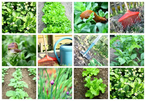 Gemüsebeet Anlegen - Vorbereitung Und Pflanzplan Nutzgarten Anlegen Tipps Planung Gartengestaltung