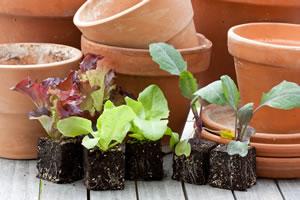 Gemüsegarten - Gemüse selbst anbauen