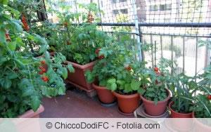 Gemüse Auf Dem Balkon Anbauen - Gemüseanbau In Balkonkästen Gemuse Im Blumentopf Garten Balkon Tipps