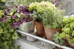 beliebte Gartenkräuter