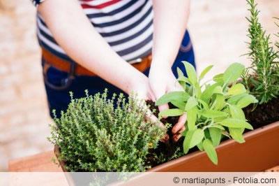 kraeuter pflanzen