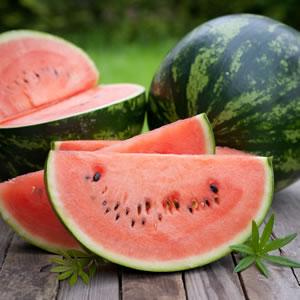 Ernte von Melonen
