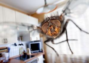 fliegenfalle selber bauen anleitung und hausmittel. Black Bedroom Furniture Sets. Home Design Ideas