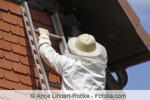 hornissennest entfernen tipps zum beseitigen von hornissen. Black Bedroom Furniture Sets. Home Design Ideas