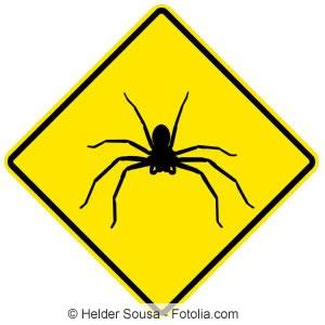 Wirksame mittel gegen spinnen