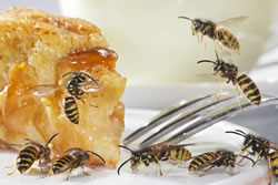 Wespen am Kuchen