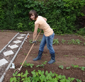 Gartenpflege Garten Anleitung Gartenpflege