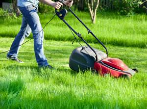 Rasen und seine Pflege