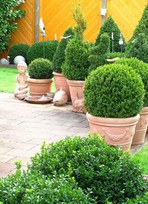 buchsbaum pflanzen pflege schneiden. Black Bedroom Furniture Sets. Home Design Ideas