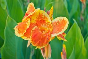 Sommerblumen & Pflanzen Sommer Blumen Pflanzen Pflege