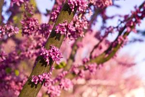kleinbaum und hausbaum - kleine bäume für den garten, Garten und erstellen