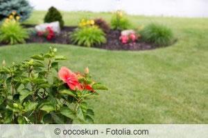hibiskus vermehren anzucht aus samen und stecklingen. Black Bedroom Furniture Sets. Home Design Ideas