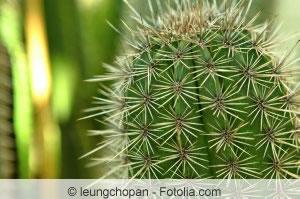 Echionpsis