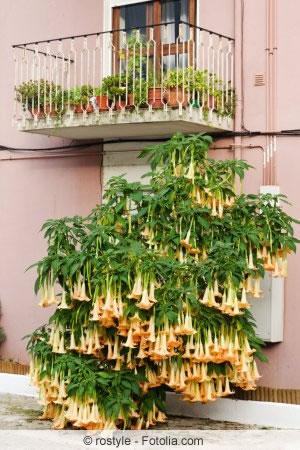 giftige pflanzen im garten die gef hrlichsten giftpflanzen. Black Bedroom Furniture Sets. Home Design Ideas
