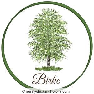 h nge birke wei birke betula pendula steckbrief pflege. Black Bedroom Furniture Sets. Home Design Ideas