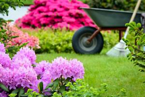 Schöner Rhododendron