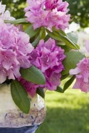 rhododendron azalee beliebte sorten und arten. Black Bedroom Furniture Sets. Home Design Ideas