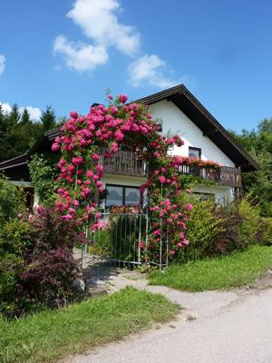 rosenbogen aus holz oder metall bauen und bepflanzen. Black Bedroom Furniture Sets. Home Design Ideas