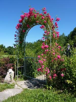 Rosenbogen aus holz oder metall - Gartentor selbstbau ...