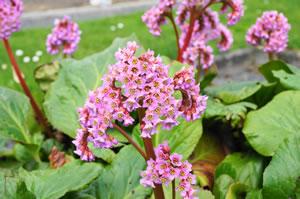 schöne steingartenpflanzen - winterharte sorten für sonne und schatten, Garten und erstellen