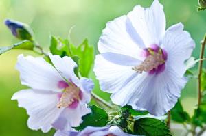 Beliebte Winterharte Stauden - Pflege-tipps Winterharte Balkonpflanzen Pflanzarten Und Pflege Tipps