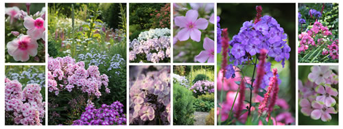 Collage der Phlox