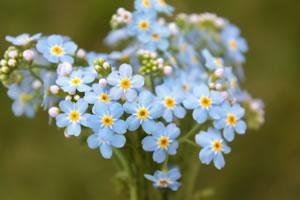 Balkonpflanzen Für Sonnige Und Schattige Standorte Balkonblumen Pflanzen Kalten Jahreszeit