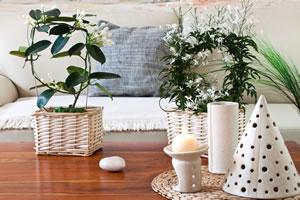jasmin pflanze pflege schneiden berwintern. Black Bedroom Furniture Sets. Home Design Ideas