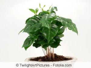 Giftige pflanzen bilder