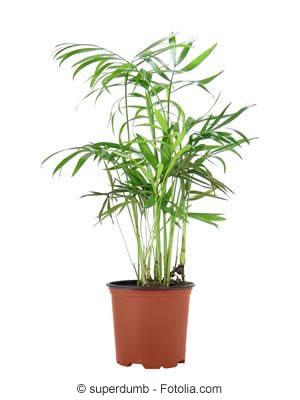 pflanzen im schlafzimmer tipps f r die richtigen. Black Bedroom Furniture Sets. Home Design Ideas
