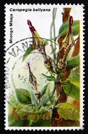 Leuchterblume auf Briefmarke