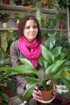 Zimmerpflanzen Für Dunkle Räume, Kühle Standorte Licht Fur Die Zimmerpflanzen Dunkle Platze