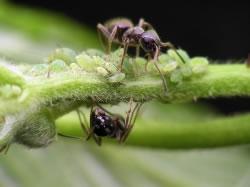 ameisen bek mpfen tipps gegen ameisen im haus garten. Black Bedroom Furniture Sets. Home Design Ideas