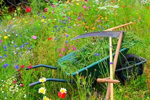blumenwiese anlegen die sch nsten wiesenblumen. Black Bedroom Furniture Sets. Home Design Ideas