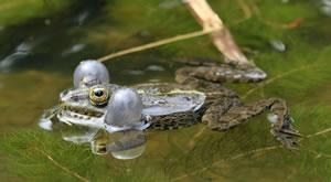 Teichfische Gartenteichfische Haltung Und Berwinterung