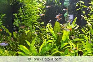 die besten wasserpflanzen f r teich aquarium pflege tipps. Black Bedroom Furniture Sets. Home Design Ideas