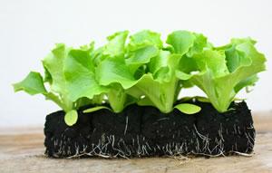 gew chshaus bepflanzen aussaatkalender gem se selber anbauen. Black Bedroom Furniture Sets. Home Design Ideas