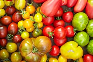 alte tomatensorten und wildtomaten eine bersicht. Black Bedroom Furniture Sets. Home Design Ideas