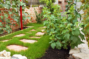 kiwi pflanzen pflege anbau im garten. Black Bedroom Furniture Sets. Home Design Ideas