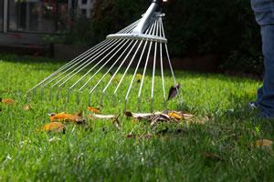 rasenpflege im sommer und im herbst rasen tipps. Black Bedroom Furniture Sets. Home Design Ideas