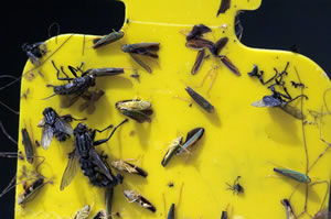 Fliegenfalle selber bauen anleitung und hausmittel for Kleine fliegen in blumenerde hausmittel