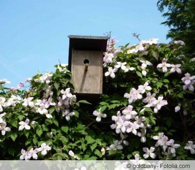 vogelschutzhecke anlegen wann darf man hecken schneiden. Black Bedroom Furniture Sets. Home Design Ideas